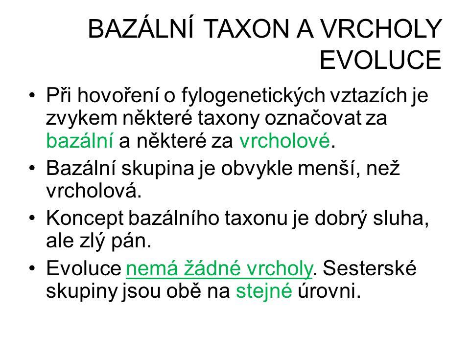 BAZÁLNÍ TAXON A VRCHOLY EVOLUCE