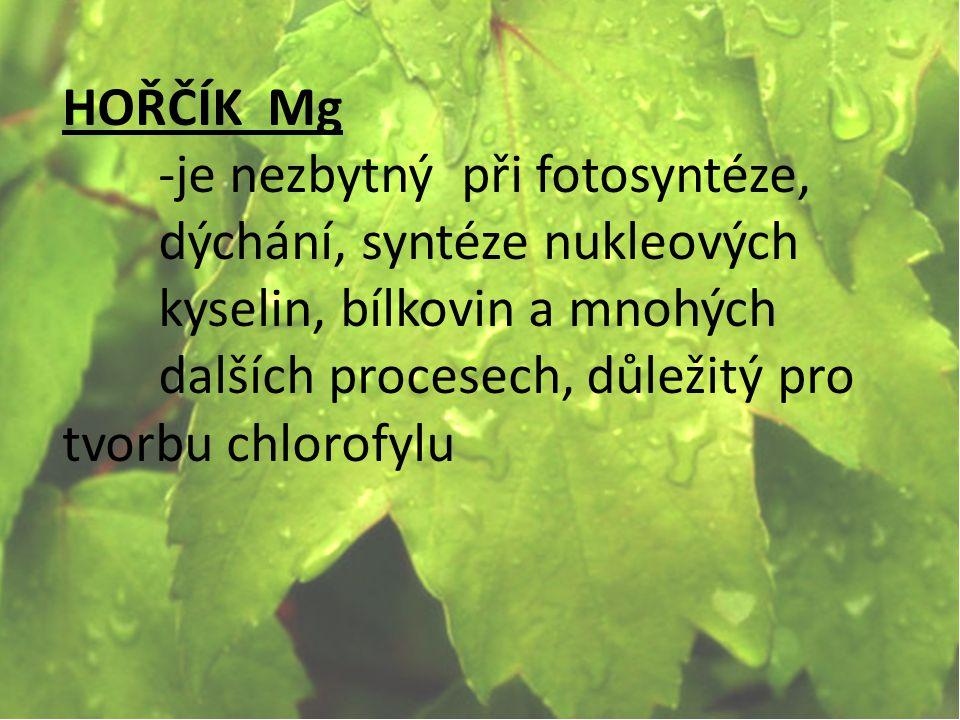 HOŘČÍK Mg