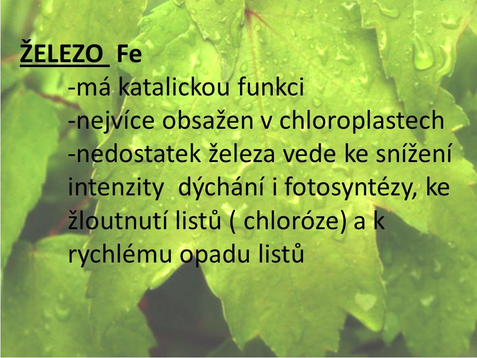 ŽELEZO Fe -má katalickou funkci. -nejvíce obsažen v chloroplastech.
