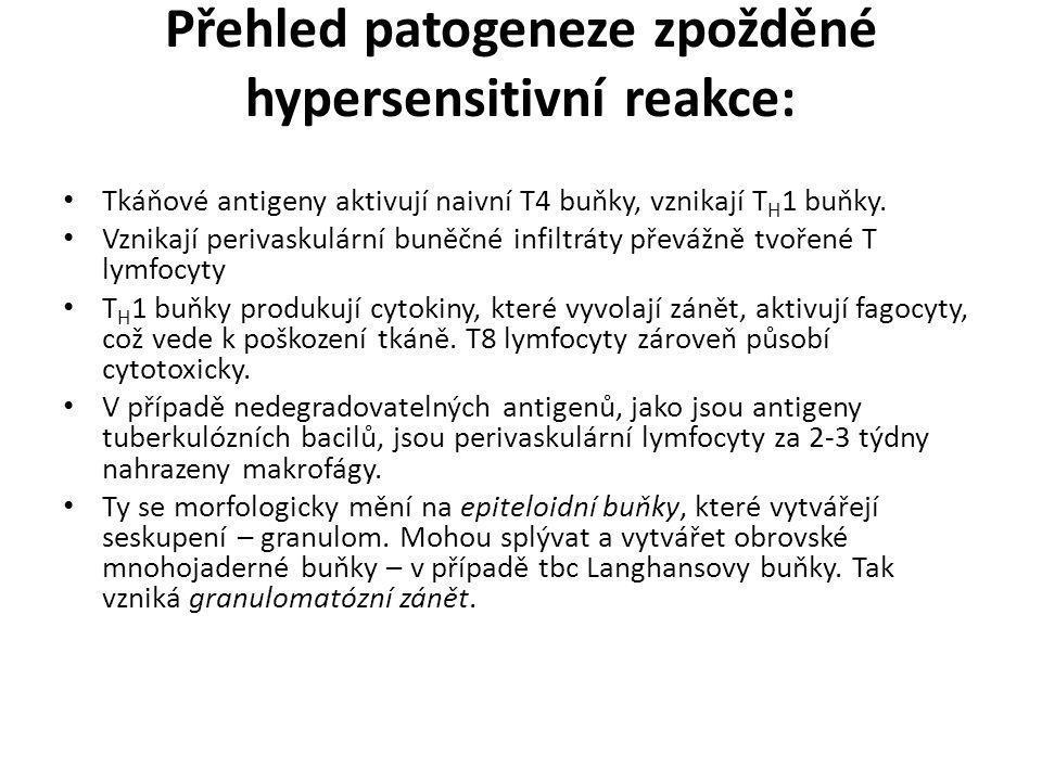 Přehled patogeneze zpožděné hypersensitivní reakce: