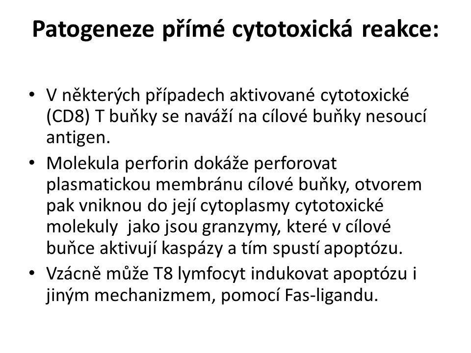 Patogeneze přímé cytotoxická reakce: