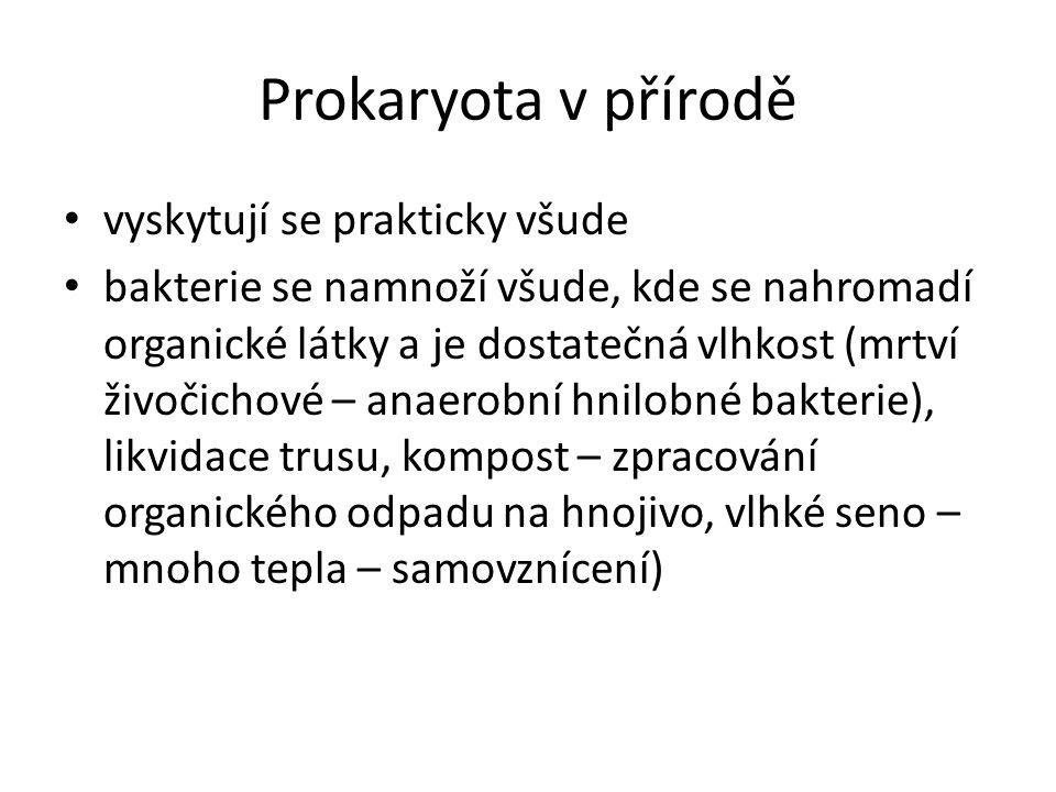 Prokaryota v přírodě vyskytují se prakticky všude