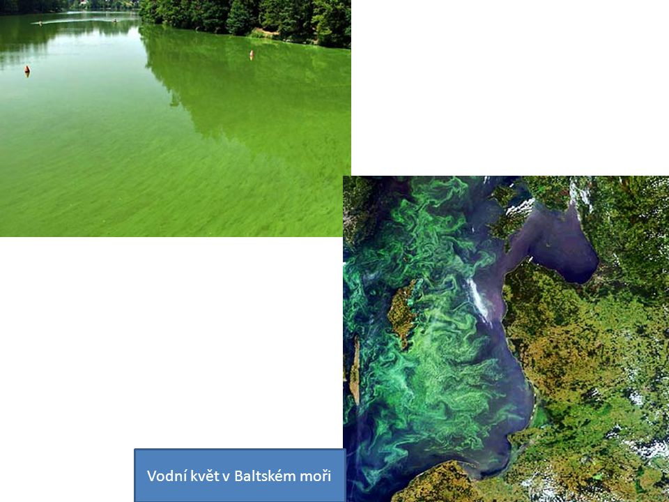 Vodní květ v Baltském moři
