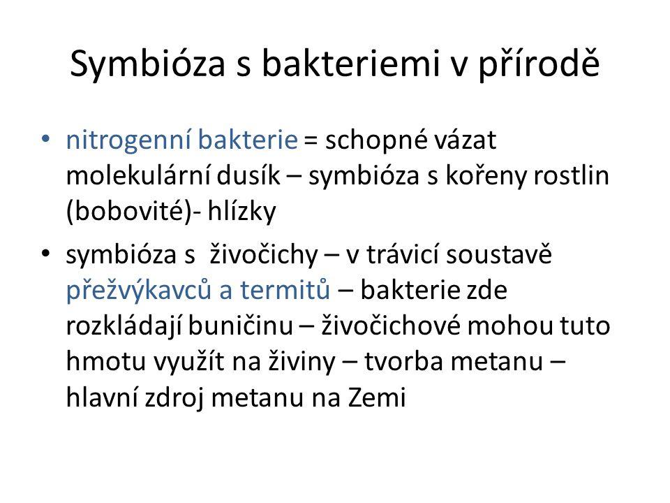 Symbióza s bakteriemi v přírodě