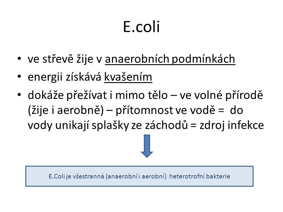 E.Coli je všestranná (anaerobní i aerobní) heterotrofní bakterie