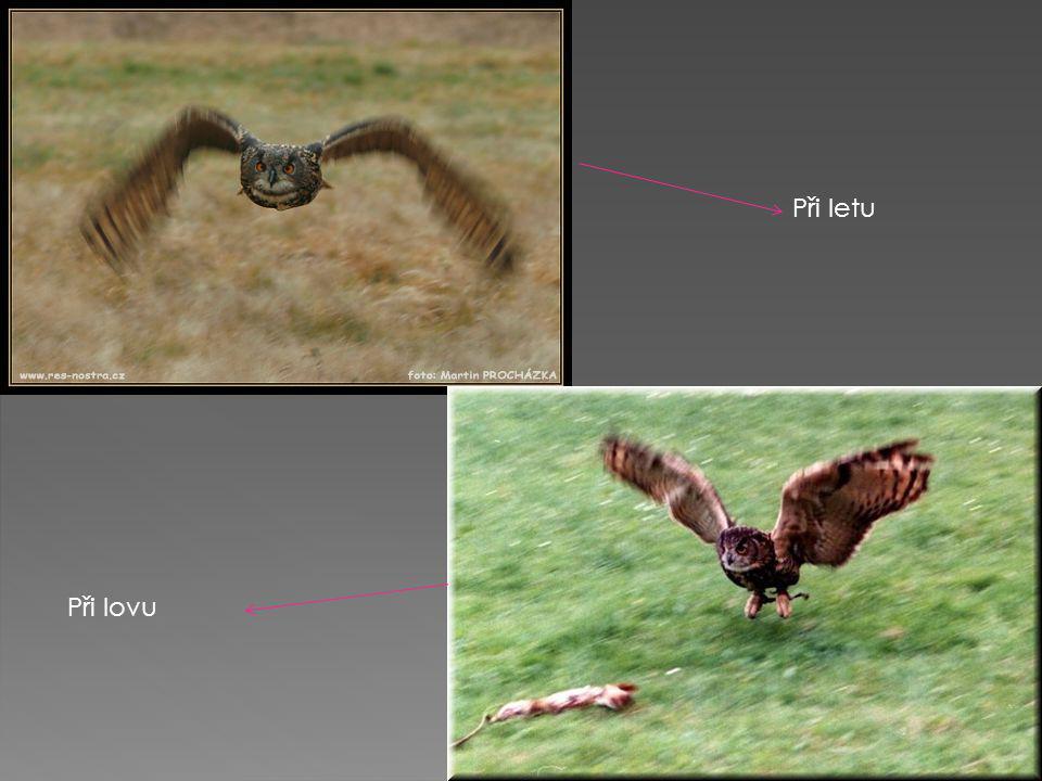 Při letu Při lovu