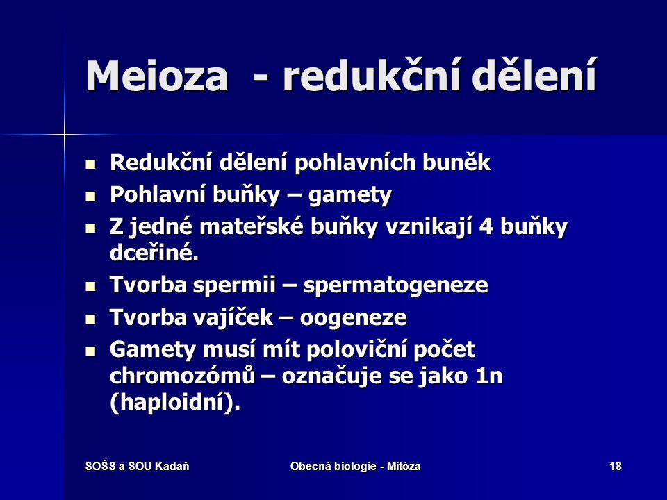 Meioza - redukční dělení