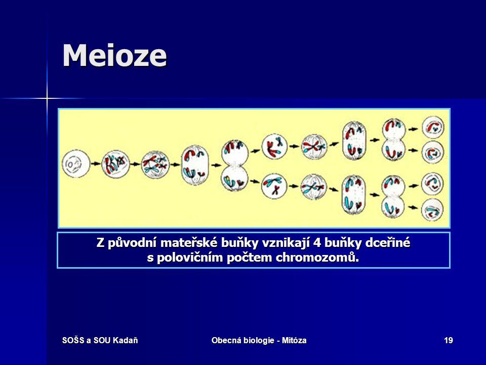 Meioze Z původní mateřské buňky vznikají 4 buňky dceřiné