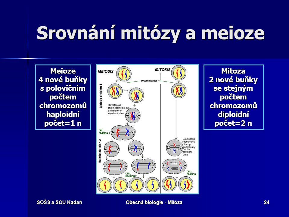 Srovnání mitózy a meioze