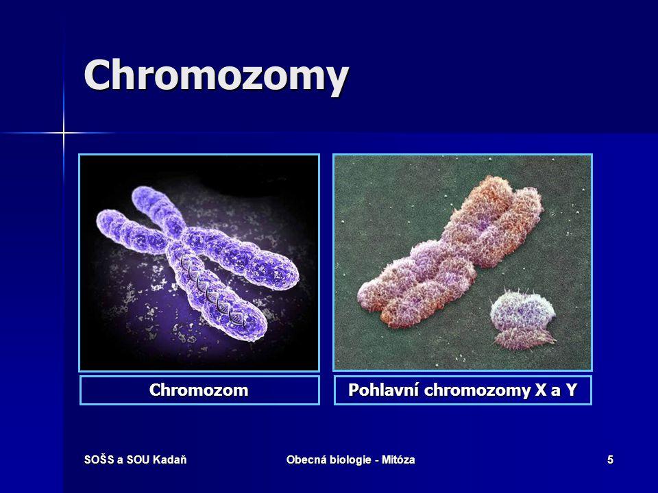 Pohlavní chromozomy X a Y Obecná biologie - Mitóza