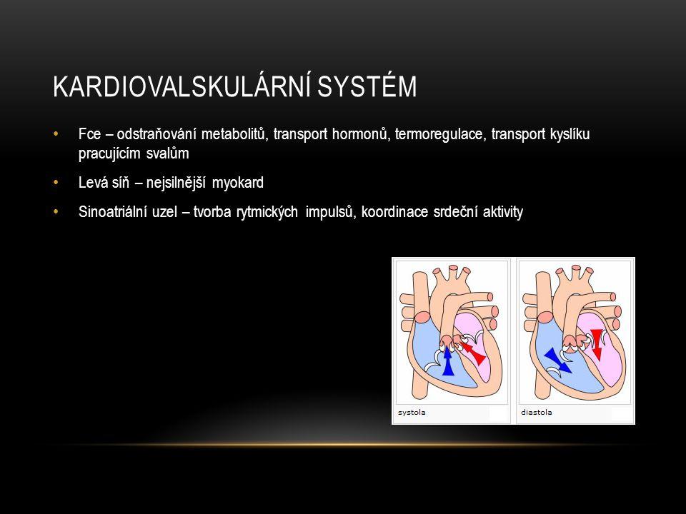 Kardiovalskulární systém