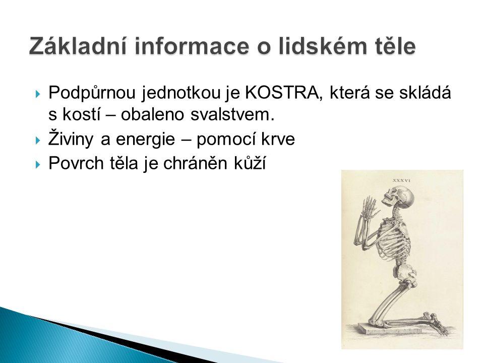 Základní informace o lidském těle