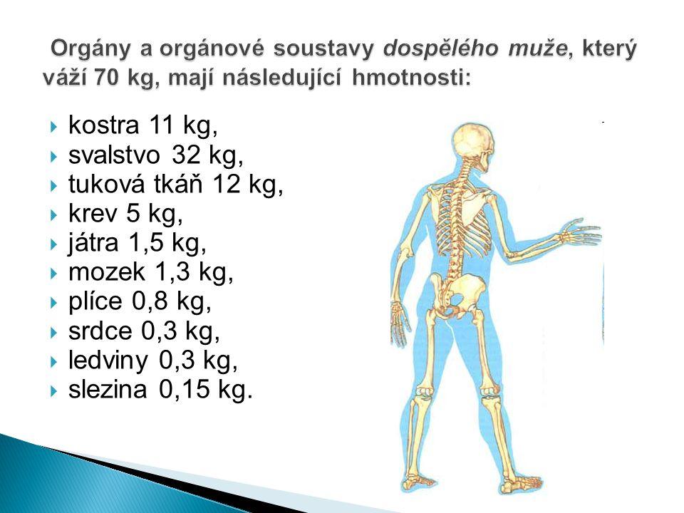 Orgány a orgánové soustavy dospělého muže, který váží 70 kg, mají následující hmotnosti: