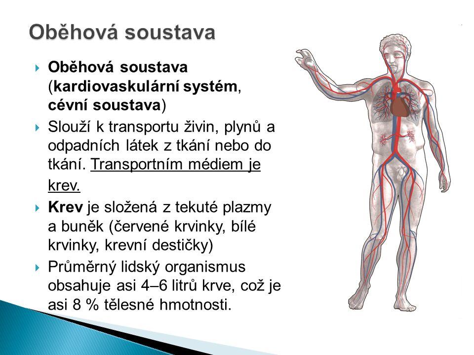 Oběhová soustava Oběhová soustava (kardiovaskulární systém, cévní soustava)