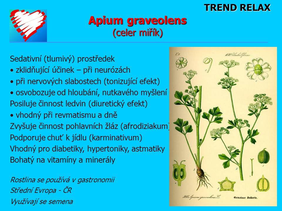 Apium graveolens (celer miřík)