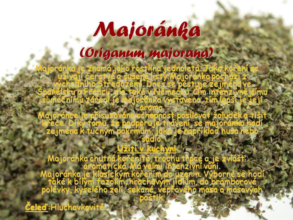 Majoránka (Origanum majorana)
