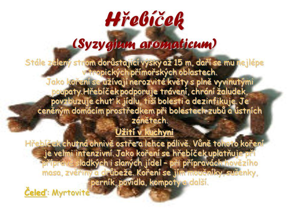 Hřebíček (Syzygium aromaticum)
