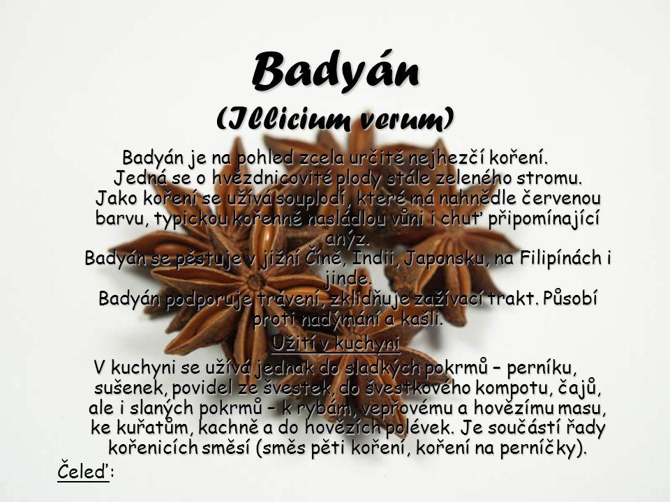 Badyán (Illicium verum)
