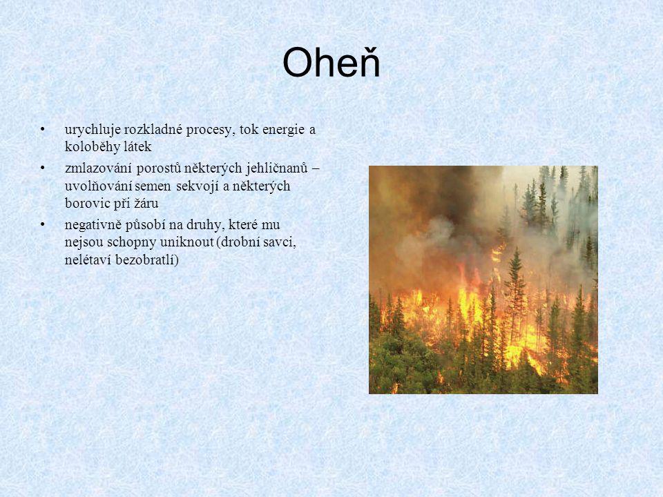 Oheň urychluje rozkladné procesy, tok energie a koloběhy látek