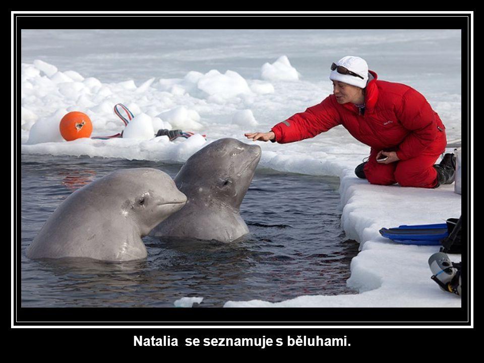 Natalia se seznamuje s běluhami.