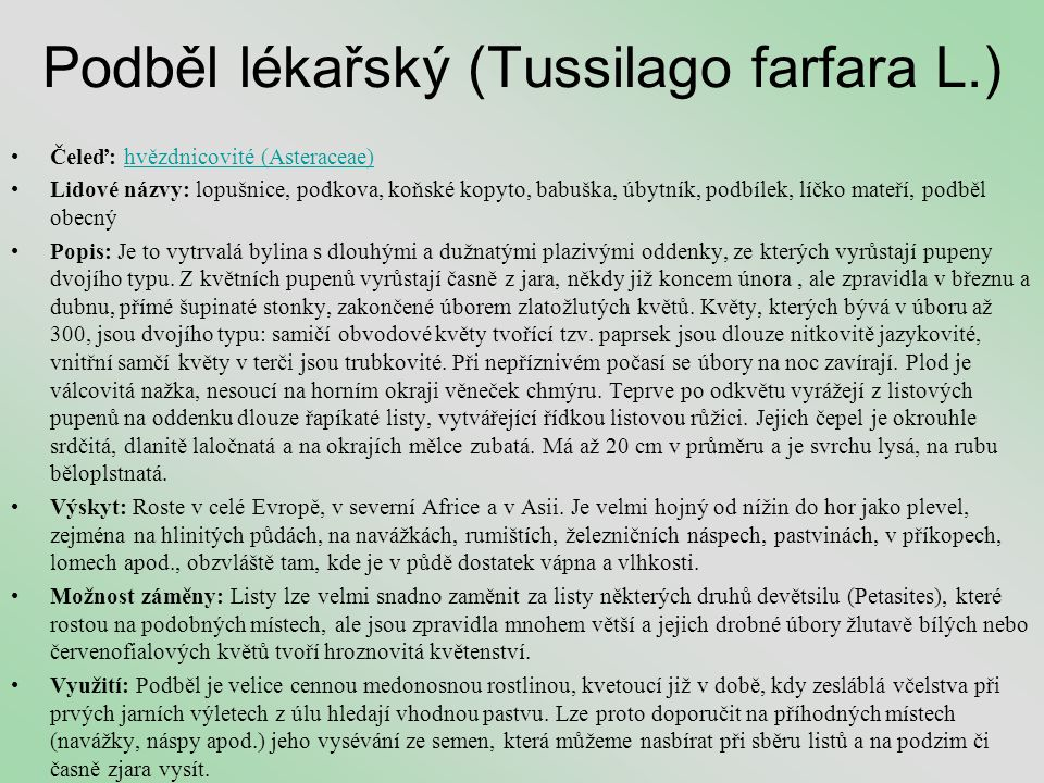 Podběl lékařský (Tussilago farfara L.)