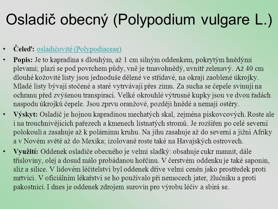 Osladič obecný (Polypodium vulgare L.)