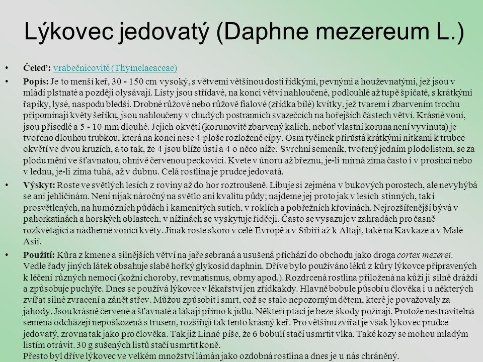 Lýkovec jedovatý (Daphne mezereum L.)
