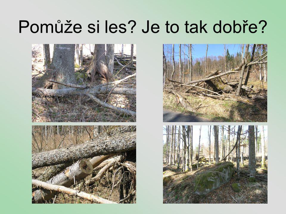 Pomůže si les Je to tak dobře