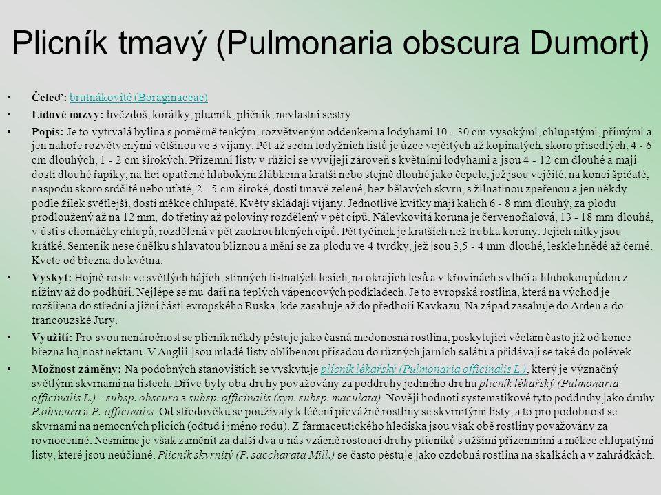 Plicník tmavý (Pulmonaria obscura Dumort)
