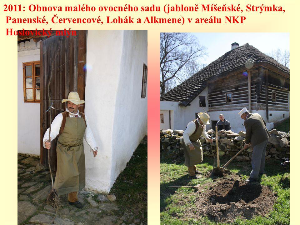 2011: Obnova malého ovocného sadu (jabloně Míšeňské, Strýmka,