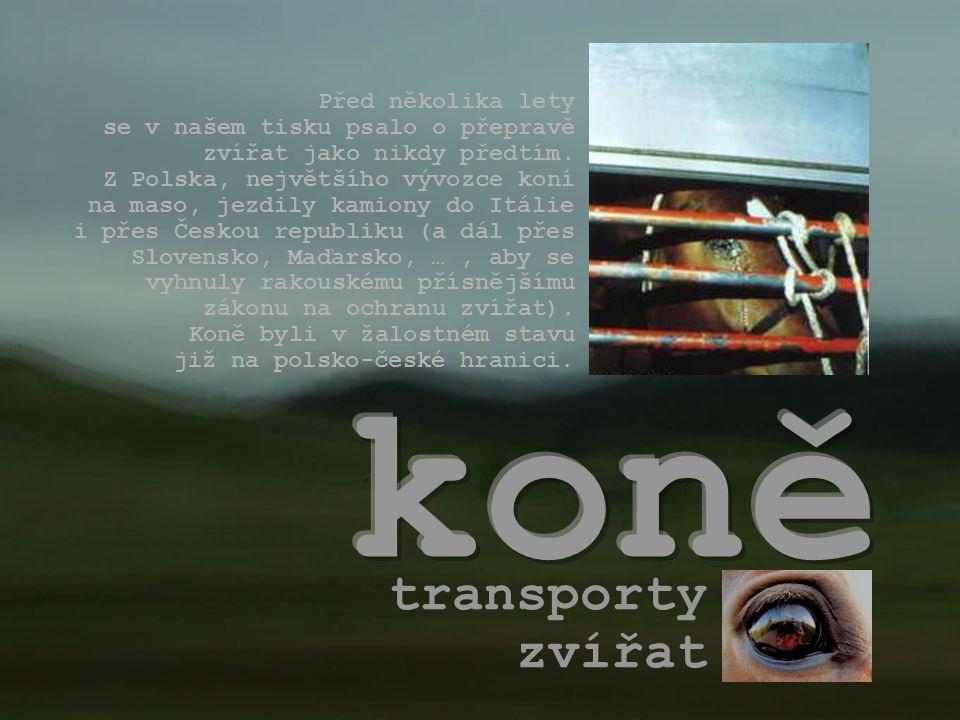 koně transporty zvířat