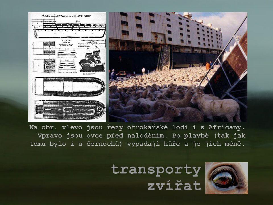 Na obr. vlevo jsou řezy otrokářské lodi i s Afričany