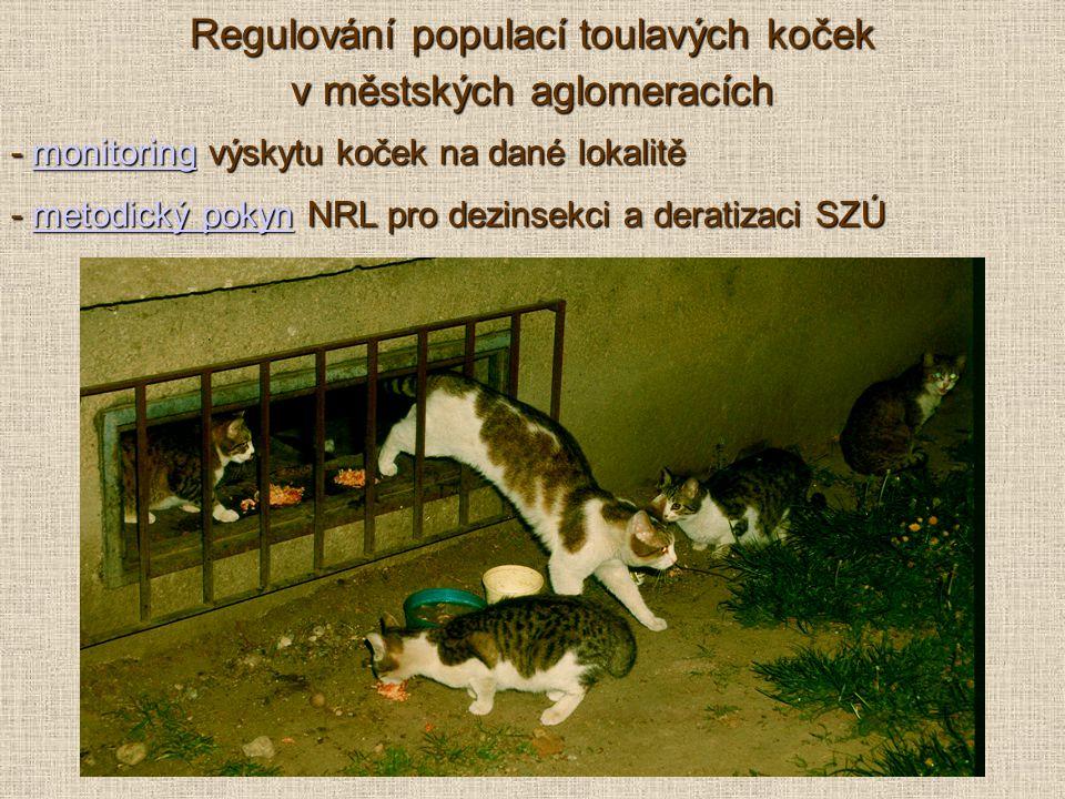 Regulování populací toulavých koček v městských aglomeracích