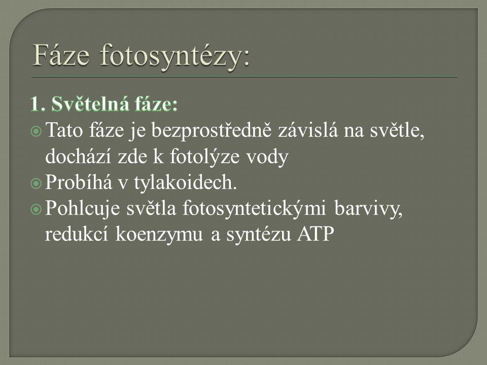 Fáze fotosyntézy: 1. Světelná fáze: