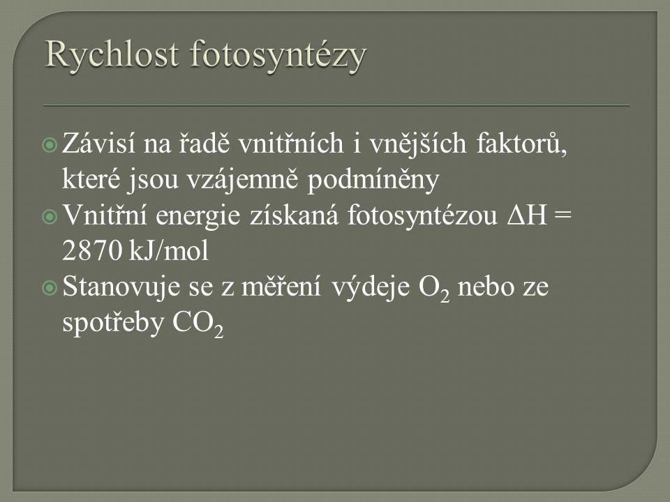 Rychlost fotosyntézy Závisí na řadě vnitřních i vnějších faktorů, které jsou vzájemně podmíněny.