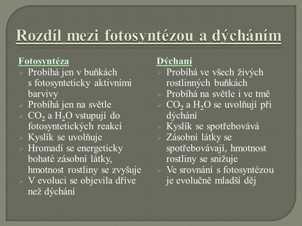 Rozdíl mezi fotosyntézou a dýcháním