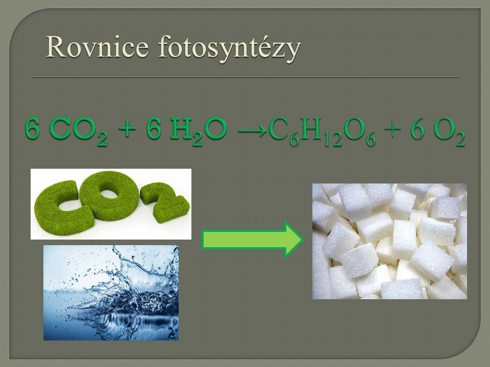 Rovnice fotosyntézy 6 CO2 + 6 H2O →C6H12O6 + 6 O2