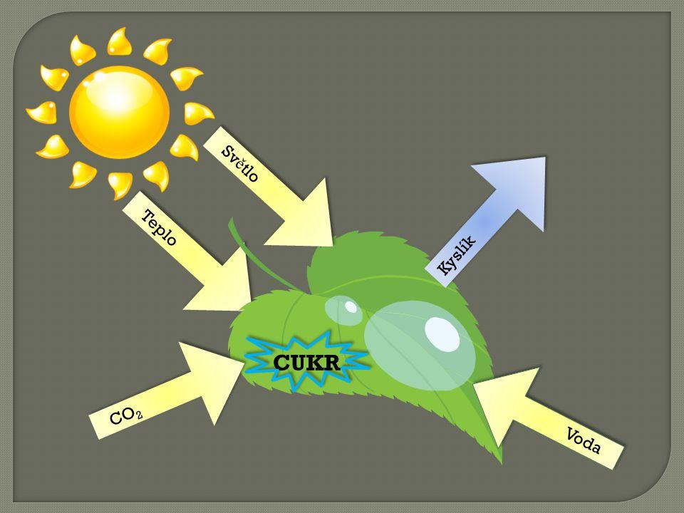 Teplo Světlo Voda CUKR Kyslík CO2