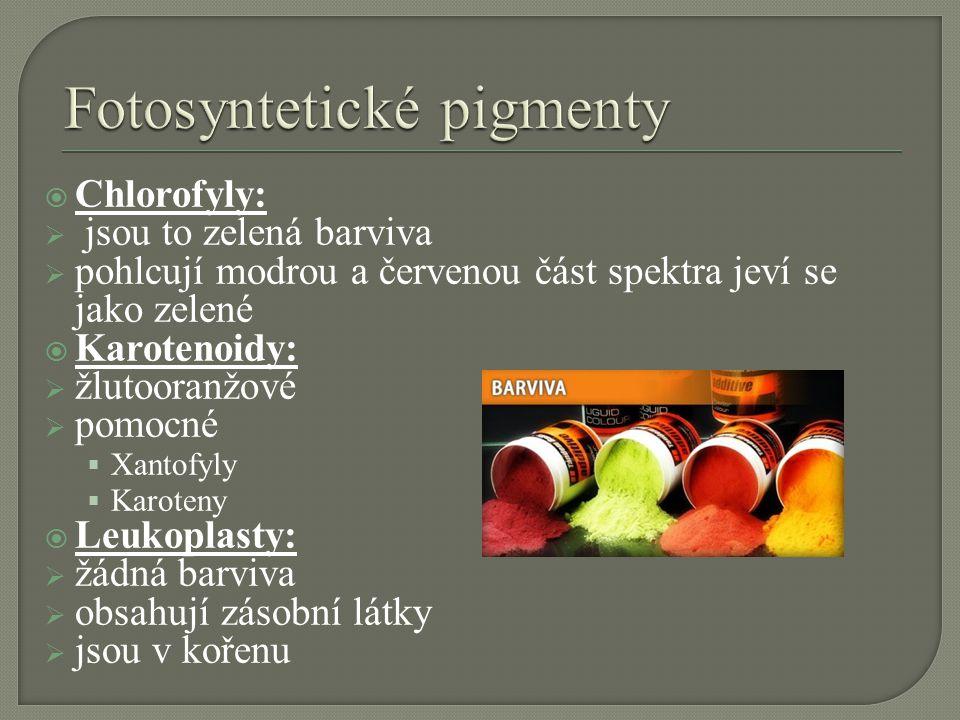 Fotosyntetické pigmenty