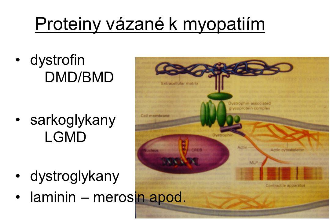 Proteiny vázané k myopatiím
