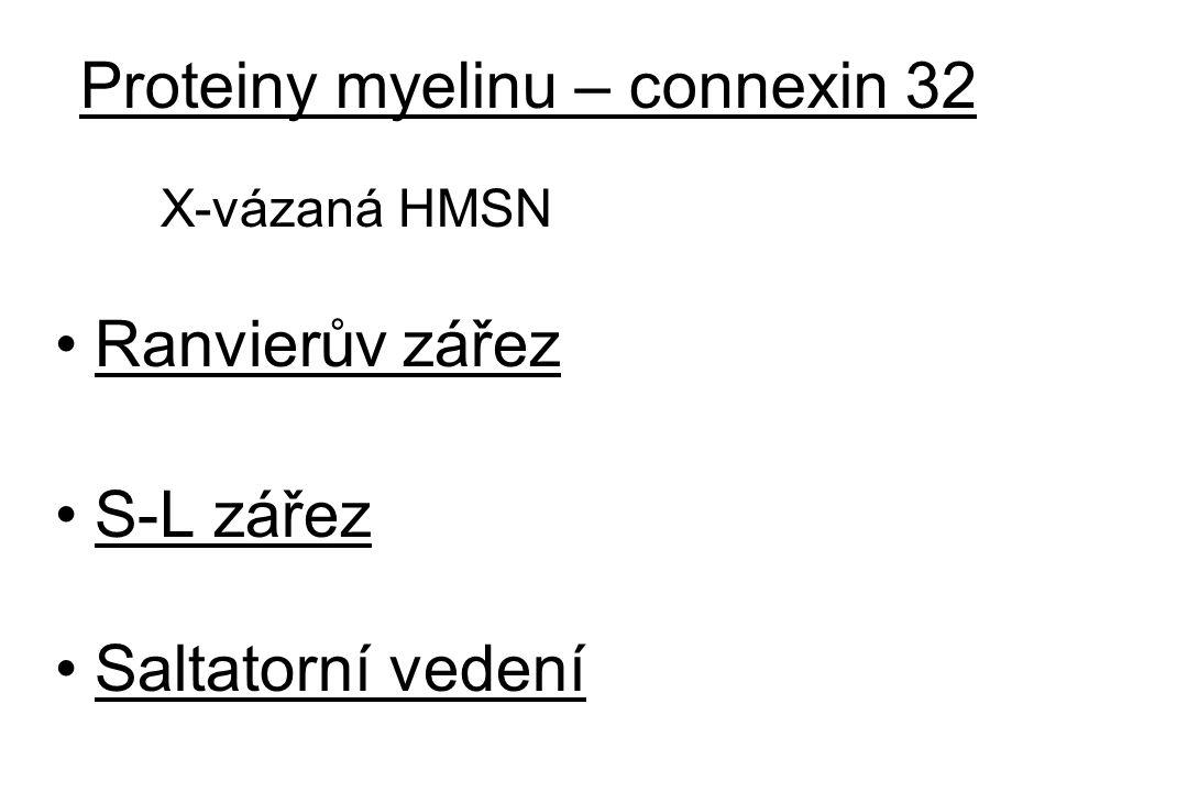Proteiny myelinu – connexin 32