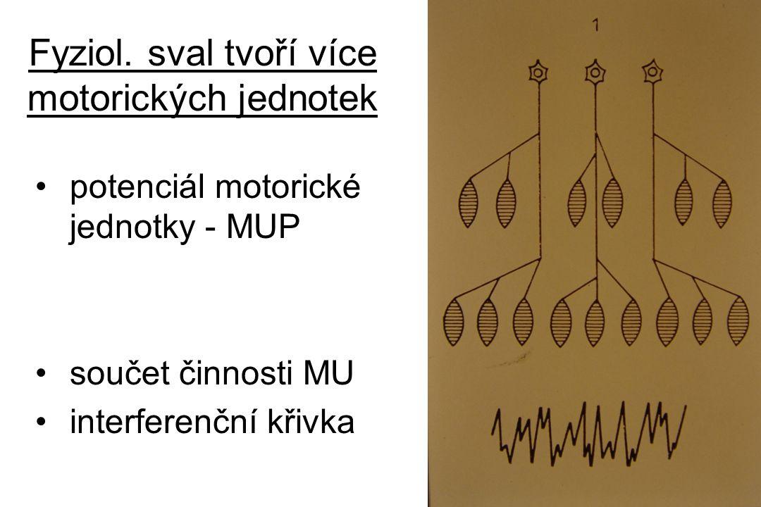 Fyziol. sval tvoří více motorických jednotek