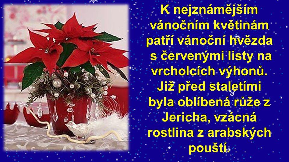 K nejznámějším vánočním květinám patří vánoční hvězda