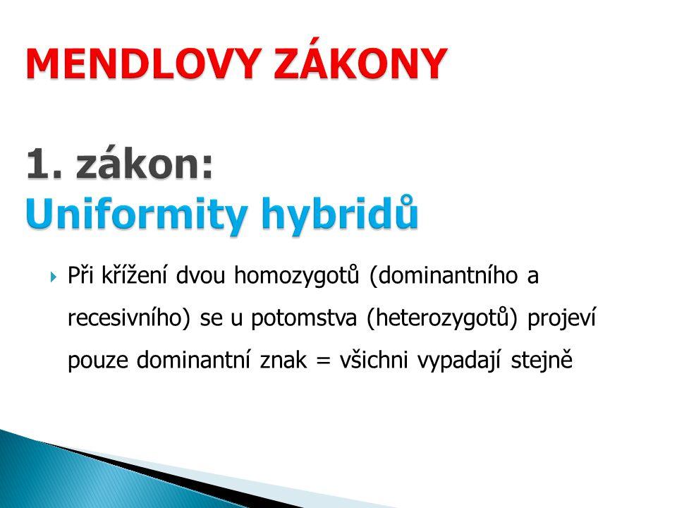 MENDLOVY ZÁKONY 1. zákon: Uniformity hybridů