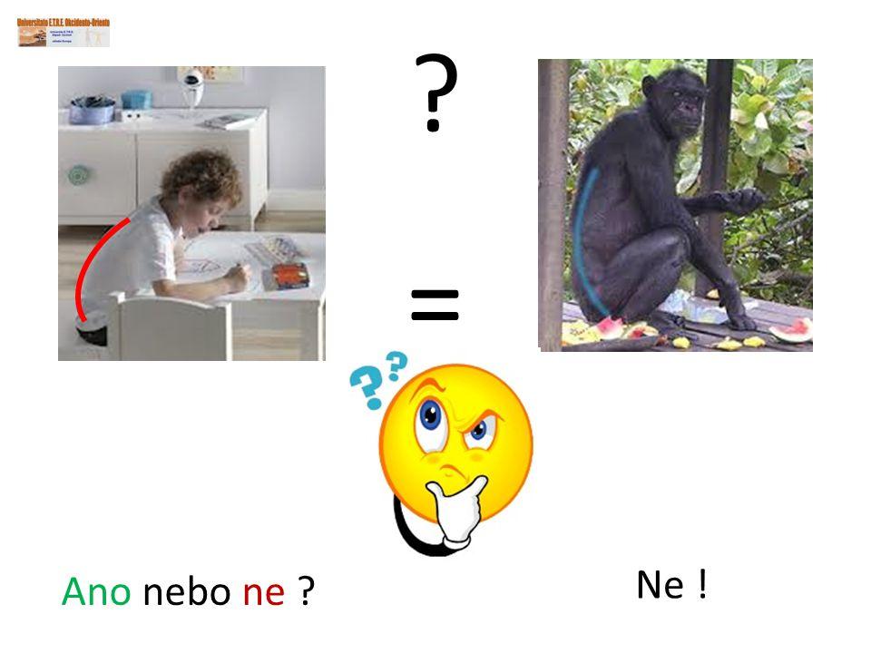 = Ne ! Ano nebo ne