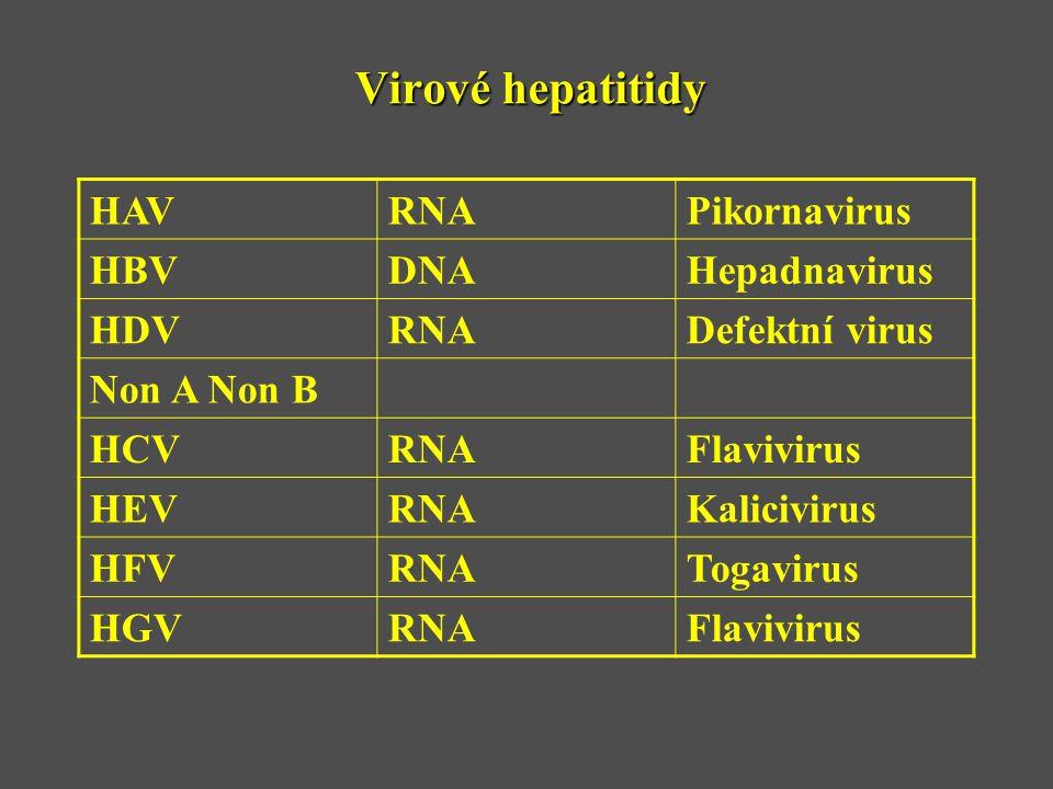 Virové hepatitidy HAV RNA Pikornavirus HBV DNA Hepadnavirus HDV