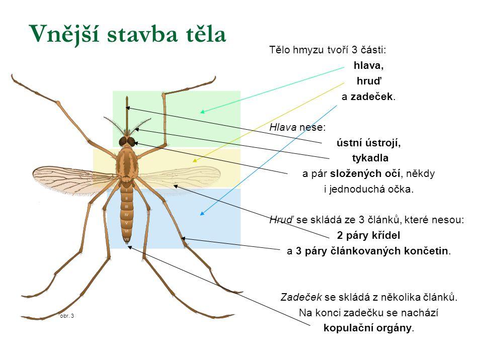 Vnější stavba těla Tělo hmyzu tvoří 3 části: hlava, hruď a zadeček.