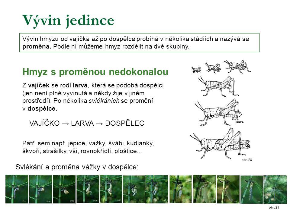 Vývin jedince Hmyz s proměnou nedokonalou VAJÍČKO → LARVA → DOSPĚLEC