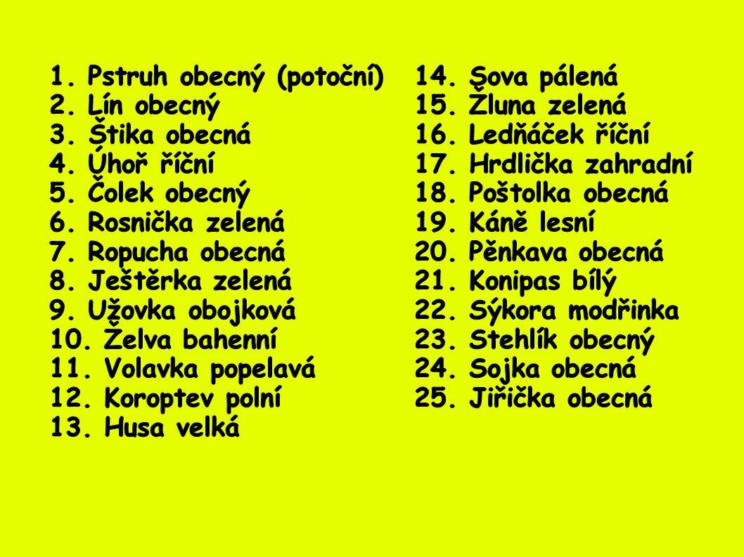1. Pstruh obecný (potoční) 14. Sova pálená
