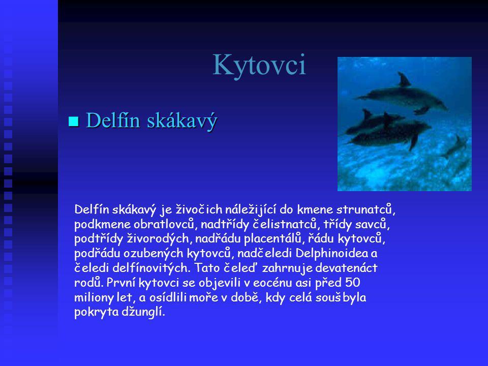 Kytovci Delfín skákavý
